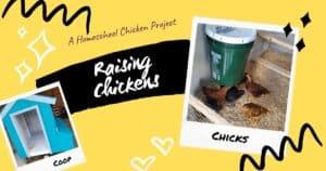 Raising Chickens A Homeschool Project