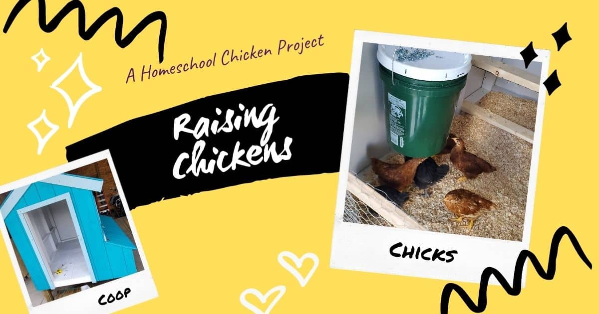 Raising Chickens & Building a Coop: Awesome Homeschool Project #1
