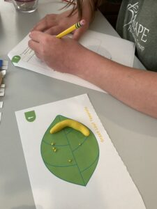 Lifecycle Science Experiment