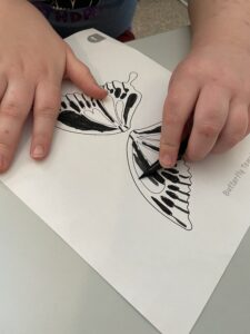Third grader coloring butterfly wing model.