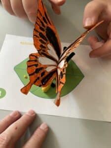BookShark Science Level D Butterfly model.